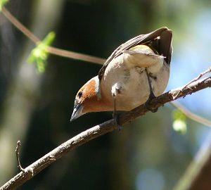 Интересно о птицах.